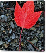 Red Leaf Almost Alone Acrylic Print
