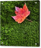 Red Leaf Green Moss Acrylic Print