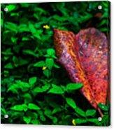 Red Leaf  Acrylic Print