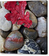 Red Leaf Wet Stones Acrylic Print by Garry Gay