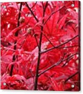 Red Leaves And Stems 2 Pd Acrylic Print