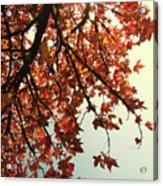 Red Life Acrylic Print