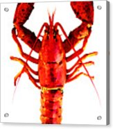 Red Lobster - Full Body Seafood Art Acrylic Print
