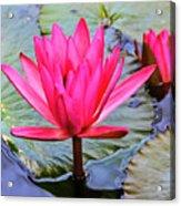 Red Lotus Acrylic Print