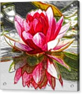 Red Lotus Flower Acrylic Print