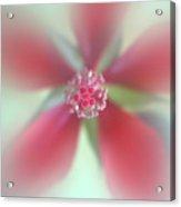 Red Macro Floral Art Acrylic Print