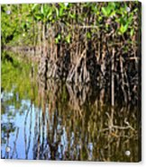 Red Mangrove Roots Reflections In The Gordon River Acrylic Print