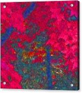 Red Maple 1 Version 1 Acrylic Print