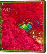 Red Maple 4 Acrylic Print