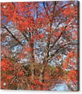 Red Maple Foliage Kaleidoscope Acrylic Print