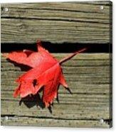 Red Maple Leaf On A Boardwalk  Acrylic Print