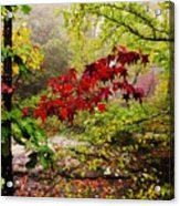 Red Maples Acrylic Print