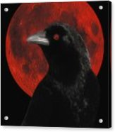 Red Moon Black Crow Acrylic Print
