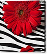 Red Mum And Red Lips Acrylic Print