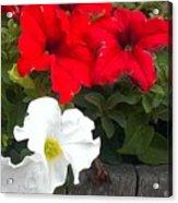 Red N White Acrylic Print