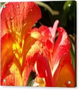 Red N Yellow Flowers 2 Acrylic Print
