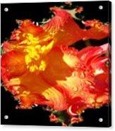 Red N Yellow Flowers Acrylic Print