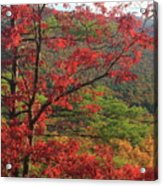Red Oak And Millers River Valley Acrylic Print