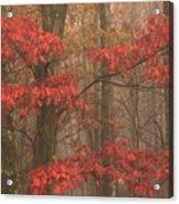 Red Oak In Fog Acrylic Print