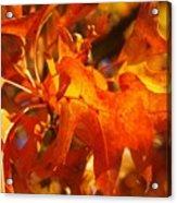 Red Oak Leaf Acrylic Print