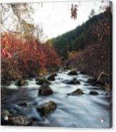 Red Oak Slow River Acrylic Print