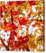 Red On A Tree Acrylic Print