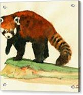 Red Panda Walk Acrylic Print