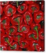 Red Paprika Acrylic Print