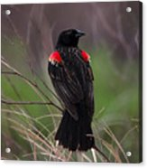 Red Patches Acrylic Print