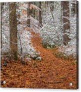 Red Path Acrylic Print