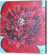 Red  Peonie Acrylic Print