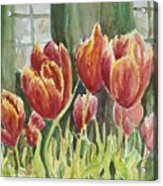 Red Pink Tulips Acrylic Print