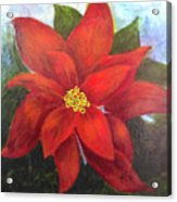 Red Poinsettia Acrylic Print