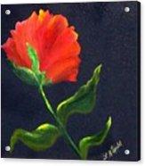 Red Poppie Acrylic Print