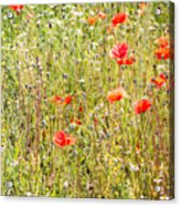Red Poppies And Wild Flowers Acrylic Print