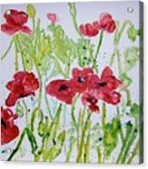 Red Poppy Flowers Acrylic Print