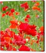 Red Poppy Flowers Meadow Art Prints Poppies Baslee Troutman Acrylic Print