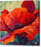 Red Poppy IIi Acrylic Print