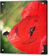 Red Poppy Impression Acrylic Print