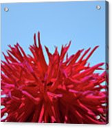 Red Purple Dahlia Flower Art Print Giclee Baslee Troutman Acrylic Print