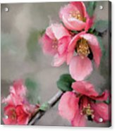 Red Quince Acrylic Print
