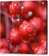 Red Rain Acrylic Print