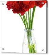 Red Ranunculus Flowers Acrylic Print