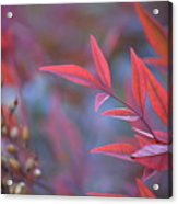 Red Red Leaves Acrylic Print