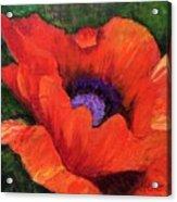 Red Rhapsody Acrylic Print