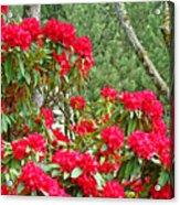 Red Rhododendron Garden Art Prints Rhodies Landscape Baslee Troutman Acrylic Print