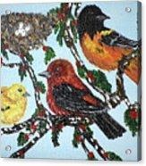 Red Robins Acrylic Print
