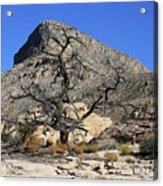 Red Rock Canyon Nv 1 Acrylic Print
