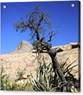 Red Rock Canyon Nv 10 Acrylic Print