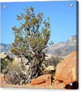 Red Rock Canyon Nv 3 Acrylic Print